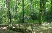 Lévézou - forêt Les Palanges
